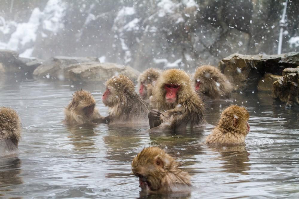 MonkeyPark.jpg
